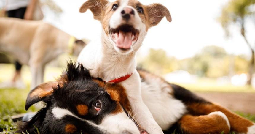 Une entente pour le parc canins Surrey à Dorval