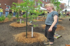 Le premier de 500 000 arbres mis en terre dans Mercier-Hochelaga-Maisonneuve
