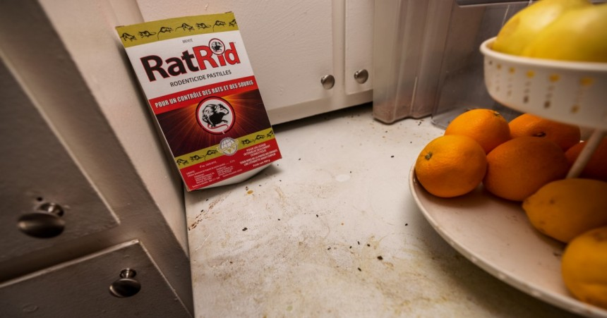 Problèmes généralisés dans les logements montréalais, selon un rapport