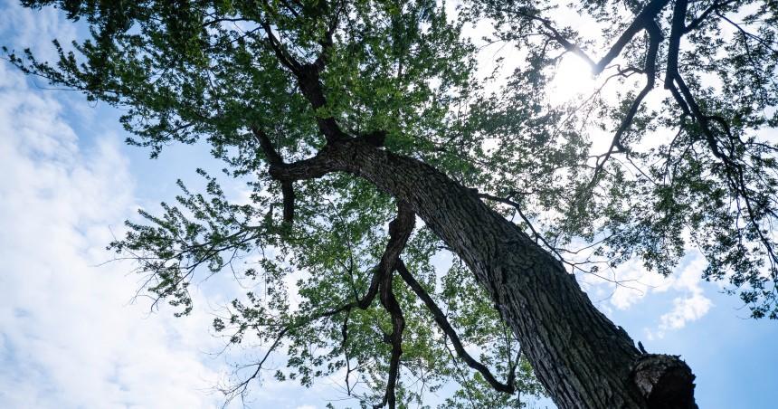 La plantation d'arbres se poursuit