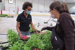 1500 personnes à la distribution de plants dans Mercier-Hochelaga-Maisonneuve