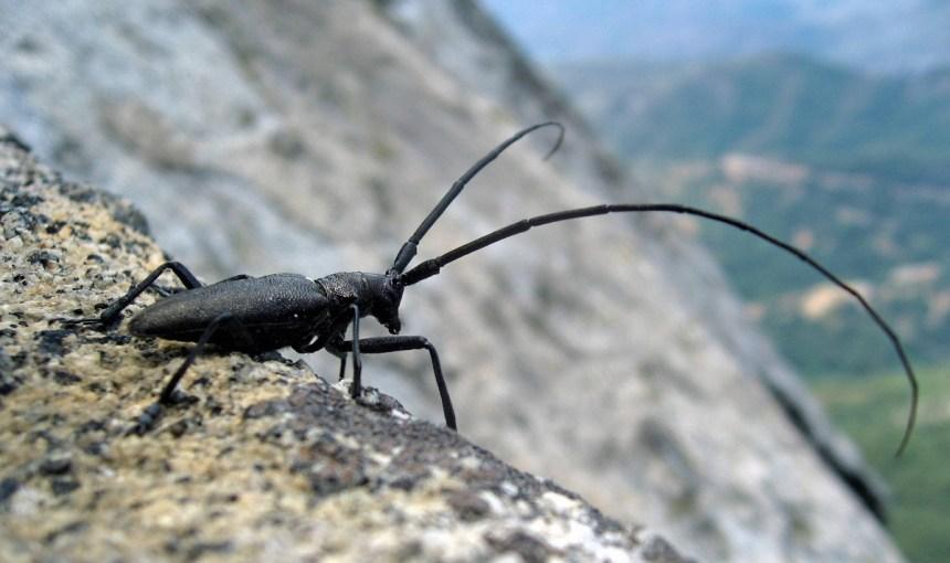Quel est l'insecte le plus laid du Québec?