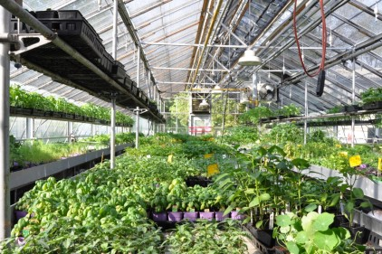 Grand potager pour démocratiser l'agriculture urbaine