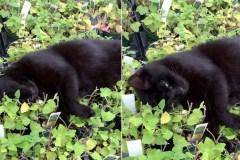 Une vraie vie de chat
