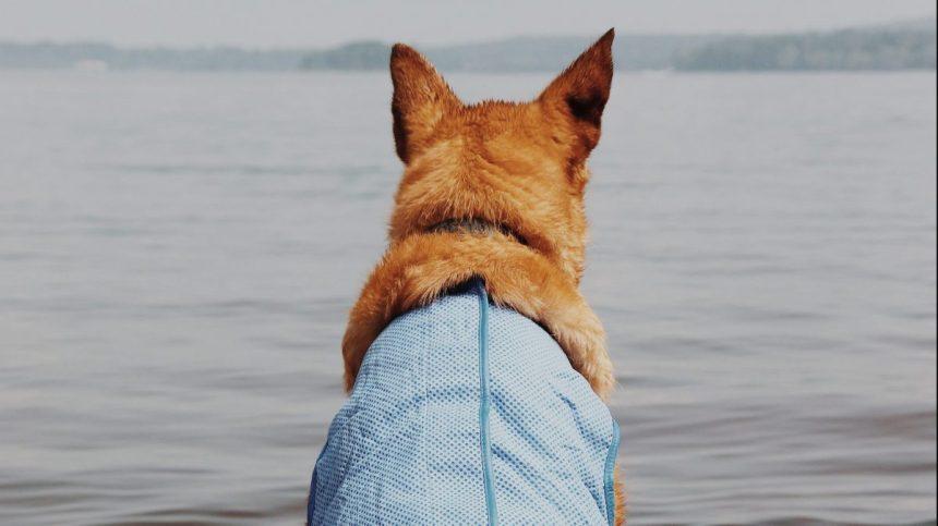Où se baigner avec pitou cet été ?