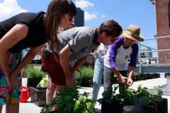 Des ateliers d'agriculture urbaine gratuits sur l'avenue du Mont-Royal
