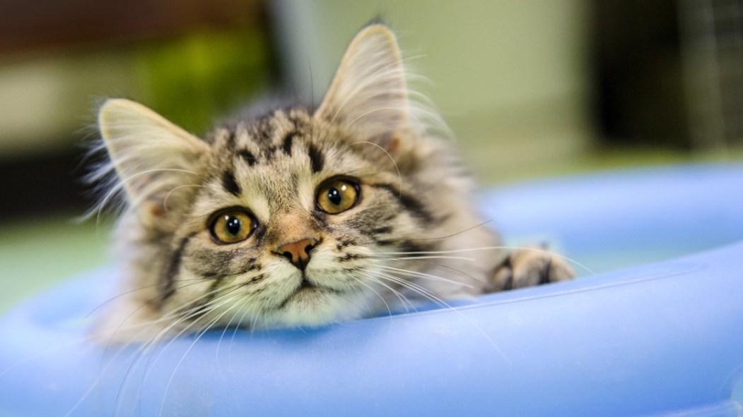 Un chat fixant la caméra, la tête accoudée sur un coussin.