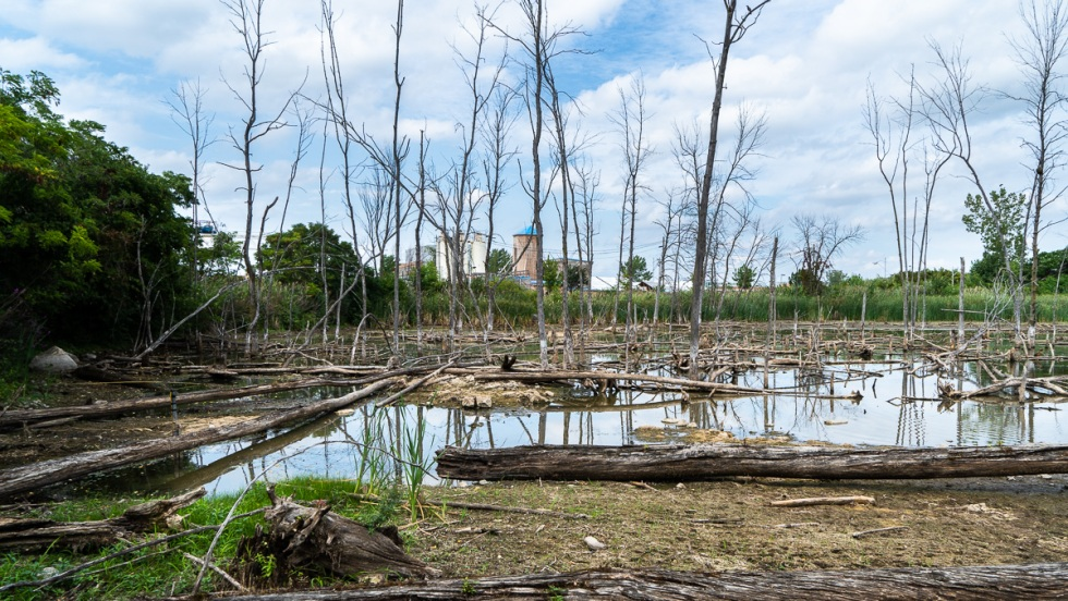 marais des herons technoparc montreal02