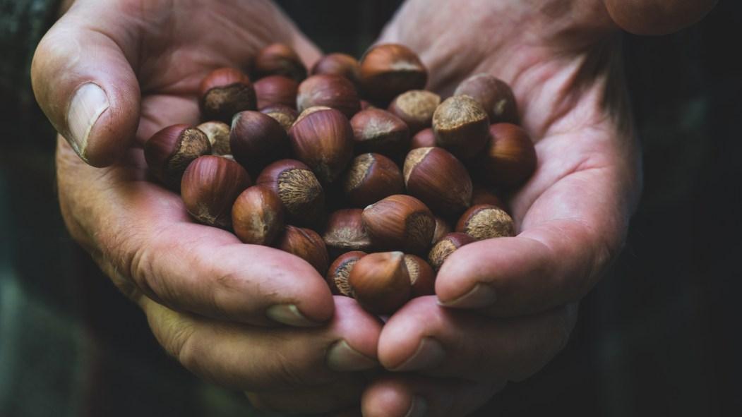 La noisette est la noix la plus commune au Québec.