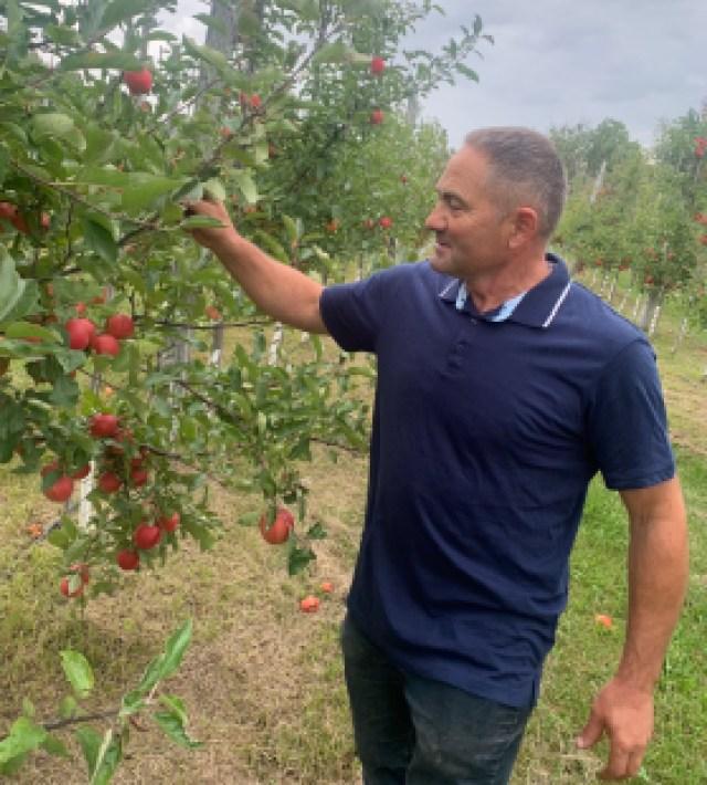 Un homme tenant une pomme dans un verger près d'un pommier.