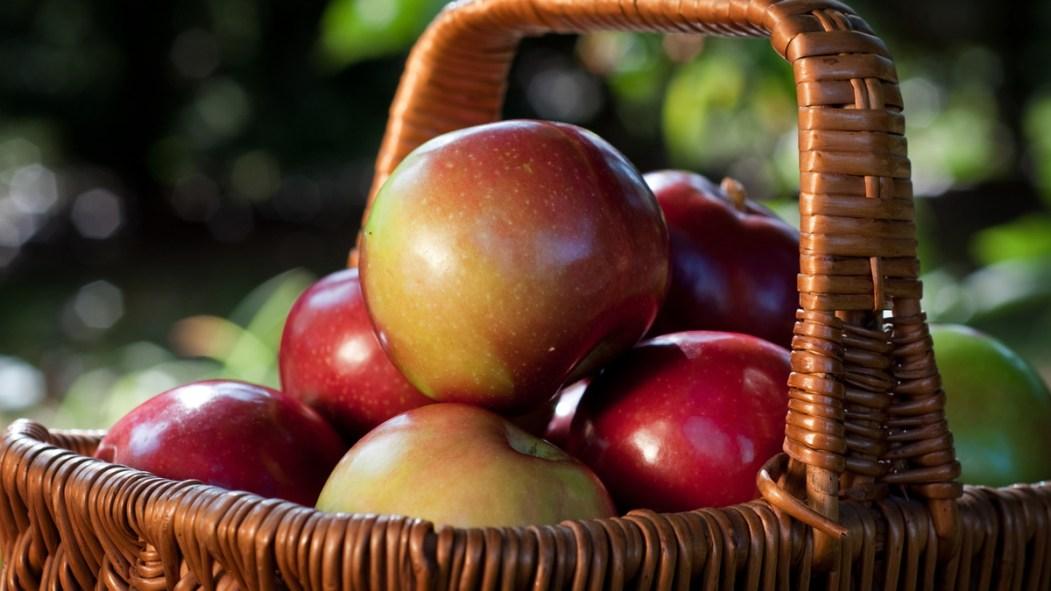 Un panier de pommes McIntosh.